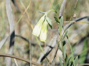 Tuz Gölünün endemik bitkileri izlemeye alındı