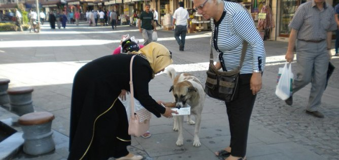 Yaz sıcağında sokak hayvanları unutulmadı